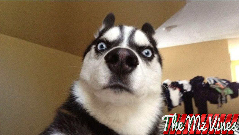 funny dog names - 1280×720