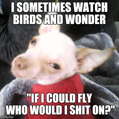 "I SOMETIMES WATCH BIRDS AND WONDER ""IF I COULD FLY WHO WOULD I SHIT ON?"" 