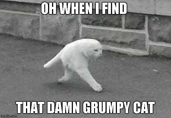 OH WHEN I FIND THAT DAMN GRUMPY CAT | made w/ Imgflip meme maker