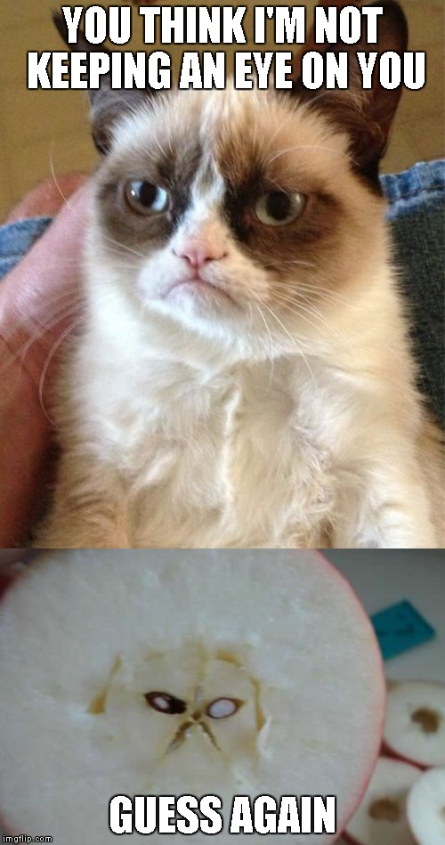 Grumpy Cat is everywhere! | YOU THINK I'M NOT KEEPING AN EYE ON YOU GUESS AGAIN | image tagged in grumpy cat | made w/ Imgflip meme maker