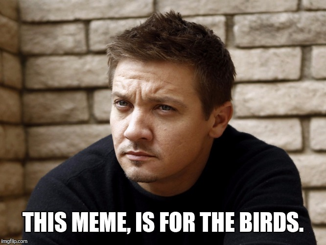THIS MEME, IS FOR THE BIRDS. | made w/ Imgflip meme maker