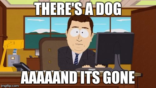 THERE'S A DOG AAAAAND ITS GONE | image tagged in memes,aaaaand its gone | made w/ Imgflip meme maker