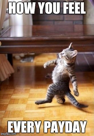 xd6o4 cool cat stroll meme imgflip