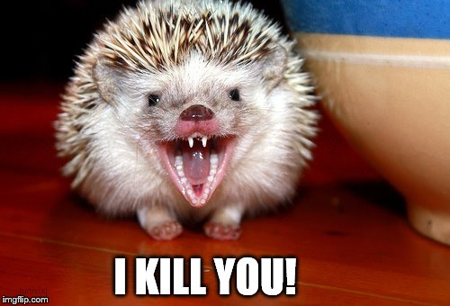 image tagged in angry hedgehog imgflip
