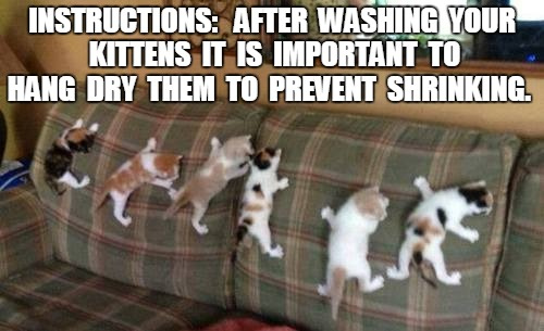 How to dry your new kittens 2