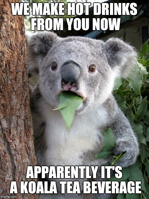 Koala Tea Meme | WE MAKE HOT DRINKS FROM YOU NOW APPARENTLY IT'S A KOALA TEA BEVERAGE | image tagged in memes,surprised koala,drink,quality,beverage,tea | made w/ Imgflip meme maker