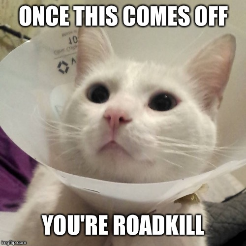 ONCE THIS COMES OFF YOU'RE ROADKILL | made w/ Imgflip meme maker