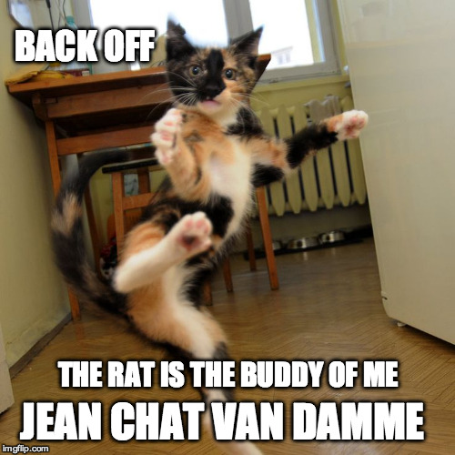 BACK OFF JEAN CHAT VAN DAMME THE RAT IS THE BUDDY OF ME | made w/ Imgflip meme maker