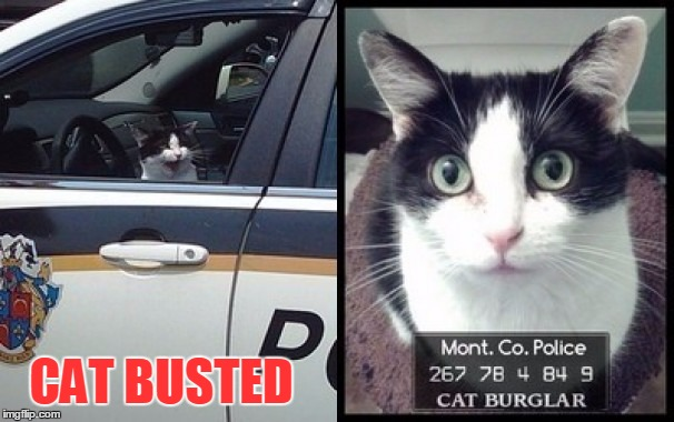 CAT BUSTED | made w/ Imgflip meme maker