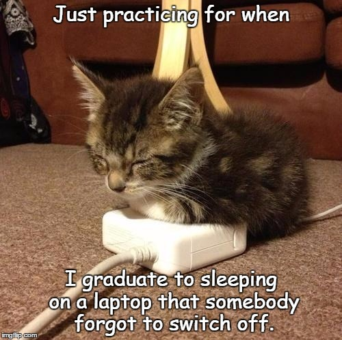 Show me warmth and I'll sit on it | Just practicing for when I graduate to sleeping on a laptop that somebody forgot to switch off. | image tagged in happy kitty | made w/ Imgflip meme maker