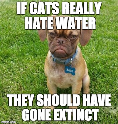 Grumpy Dog |  IF CATS REALLY HATE WATER; THEY SHOULD HAVE GONE EXTINCT | image tagged in grumpy dog | made w/ Imgflip meme maker