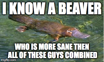 Platypus by Strongly Opinionated Platypus | I KNOW A BEAVER WHO IS MORE SANE THEN ALL OF THESE GUYS COMBINED | image tagged in platypus by strongly opinionated platypus | made w/ Imgflip meme maker
