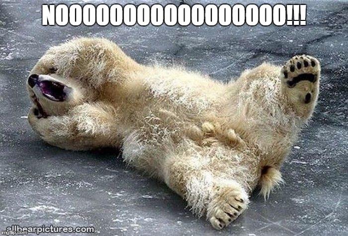 Nooooooo!! Bear | NOOOOOOOOOOOOOOOOO!!! | image tagged in nooooooooo,bear | made w/ Imgflip meme maker