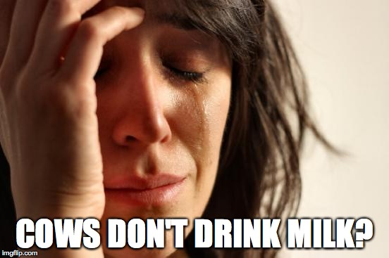 First World Problems Meme | COWS DON'T DRINK MILK? | image tagged in memes,first world problems | made w/ Imgflip meme maker