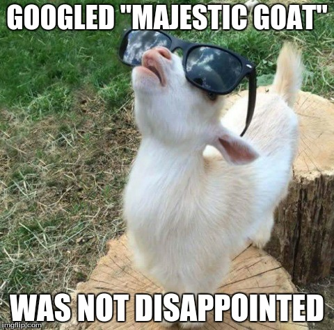"So Majestic | GOOGLED ""MAJESTIC GOAT"" WAS NOT DISAPPOINTED 
