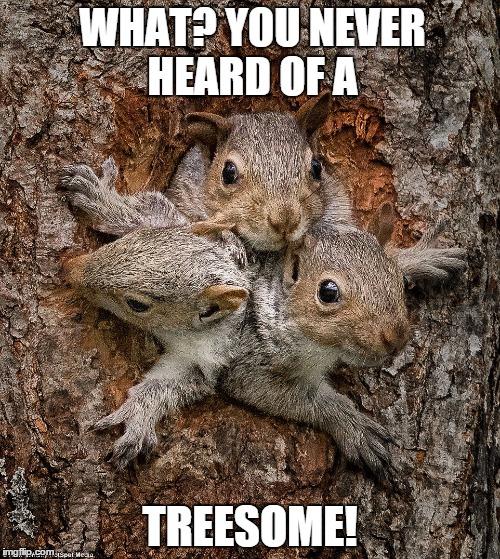 Squirrel kiss meme - photo#16