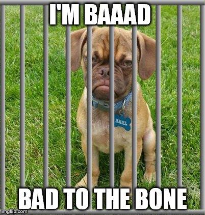 No Bad Dog Meme