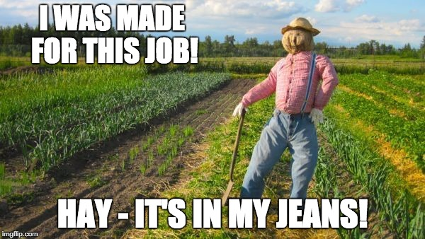 Scarecrow | I WAS MADE FOR THIS JOB! HAY - IT'S IN MY JEANS! | image tagged in scarecrow | made w/ Imgflip meme maker