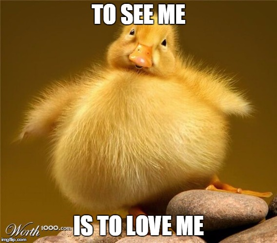 TO SEE ME IS TO LOVE ME | made w/ Imgflip meme maker