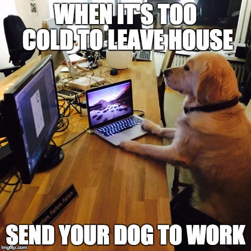 xnqgb too cold for humans imgflip