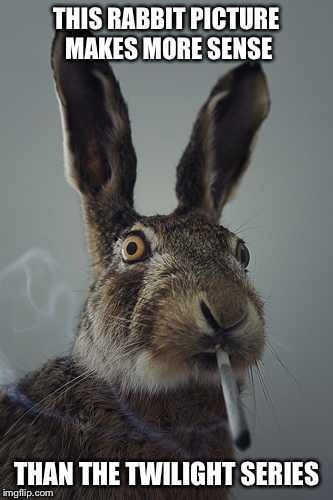 Rabbit smoking  | THIS RABBIT PICTURE  MAKES MORE SENSE THAN THE TWILIGHT SERIES | image tagged in rabbit smoking | made w/ Imgflip meme maker