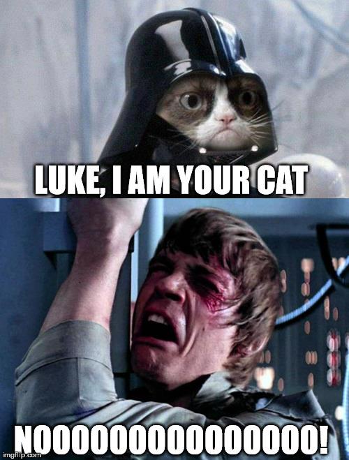 Darth Vader Cat Memes