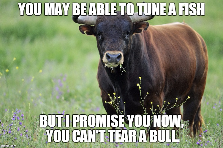 YOU MAY BE ABLE TO TUNE A FISH BUT I PROMISE YOU NOW, YOU CAN'T TEAR A BULL. | made w/ Imgflip meme maker