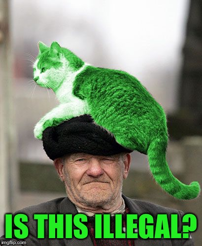 Cat on a Hat | IS THIS ILLEGAL? | image tagged in cat on a hat | made w/ Imgflip meme maker