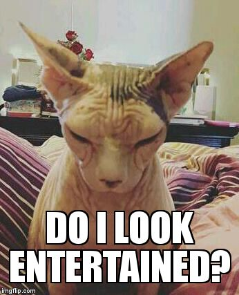 extra grumpy bald cat | DO I LOOK ENTERTAINED? | image tagged in extra grumpy bald cat | made w/ Imgflip meme maker