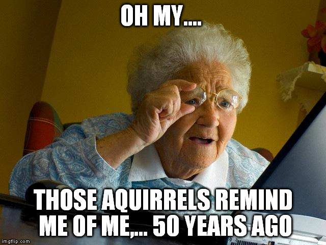 Grandma Finds The Internet Meme | OH MY.... THOSE AQUIRRELS REMIND ME OF ME,... 50 YEARS AGO | image tagged in memes,grandma finds the internet | made w/ Imgflip meme maker