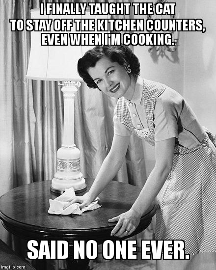 This is a constant battle for me.... | I FINALLY TAUGHT THE CAT TO STAY OFF THE KITCHEN COUNTERS, EVEN WHEN I'M COOKING. SAID NO ONE EVER. | image tagged in yo momma so clean,annoying cat | made w/ Imgflip meme maker
