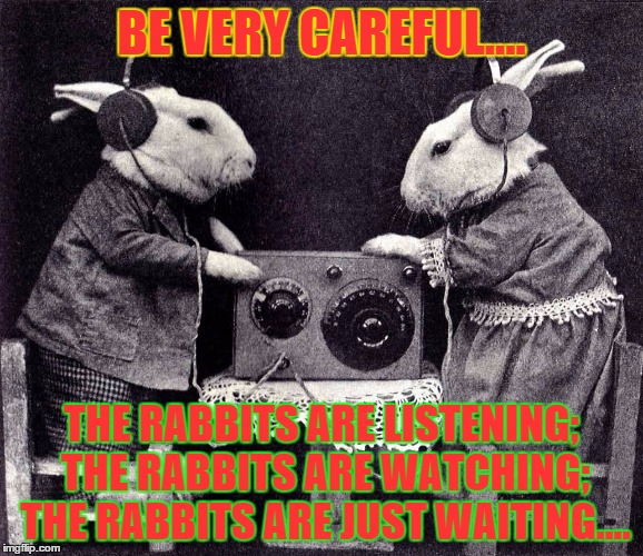 evil rabbits |  BE VERY CAREFUL.... THE RABBITS ARE LISTENING; THE RABBITS ARE WATCHING; THE RABBITS ARE JUST WAITING.... | image tagged in bunnies | made w/ Imgflip meme maker
