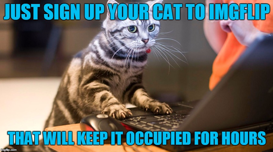 JUST SIGN UP YOUR CAT TO IMGFLIP THAT WILL KEEP IT OCCUPIED FOR HOURS | made w/ Imgflip meme maker