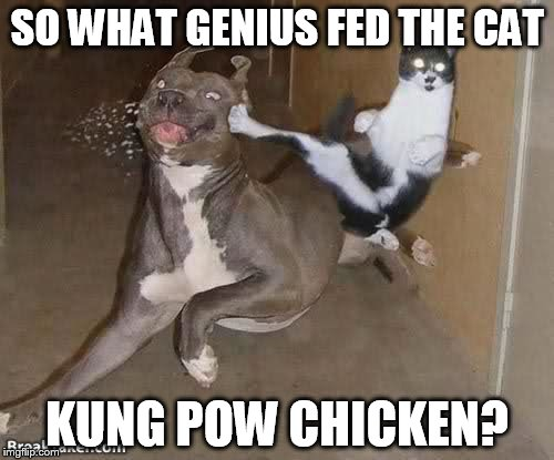 Hwaaaaaaaaaaaaaa | SO WHAT GENIUS FED THE CAT KUNG POW CHICKEN? | image tagged in memes,dogs,cats,animals,funny | made w/ Imgflip meme maker