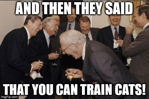 Laughing Men In Suits Meme | AND THEN THEY SAID THAT YOU CAN TRAIN CATS! | image tagged in memes,laughing men in suits | made w/ Imgflip meme maker