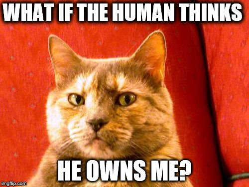 Suspicious Cat | WHAT IF THE HUMAN THINKS HE OWNS ME? | image tagged in memes,suspicious cat | made w/ Imgflip meme maker