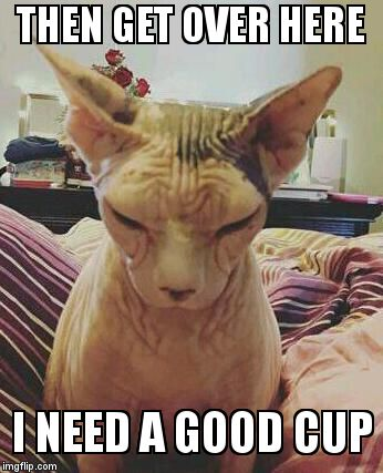extra grumpy bald cat | THEN GET OVER HERE I NEED A GOOD CUP | image tagged in extra grumpy bald cat | made w/ Imgflip meme maker
