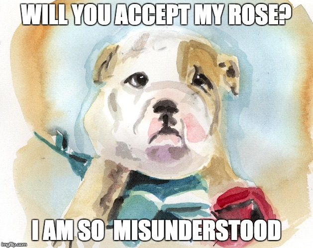 MISUNDERSTOOD BULLDOG |  WILL YOU ACCEPT MY ROSE? I AM SO  MISUNDERSTOOD | image tagged in dog,roses,bulldog,love,pets,bachelorette | made w/ Imgflip meme maker