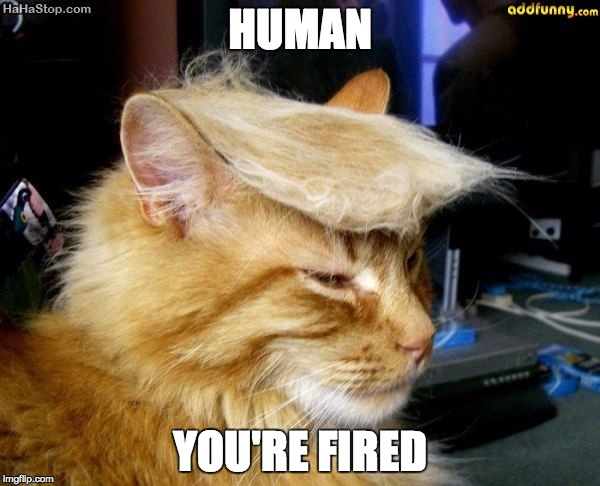 donald trump cat |  HUMAN; YOU'RE FIRED | image tagged in donald trump cat | made w/ Imgflip meme maker