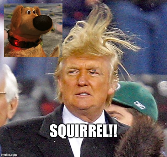 I love my master | SQUIRREL!! | image tagged in trump,donald trumph hair | made w/ Imgflip meme maker