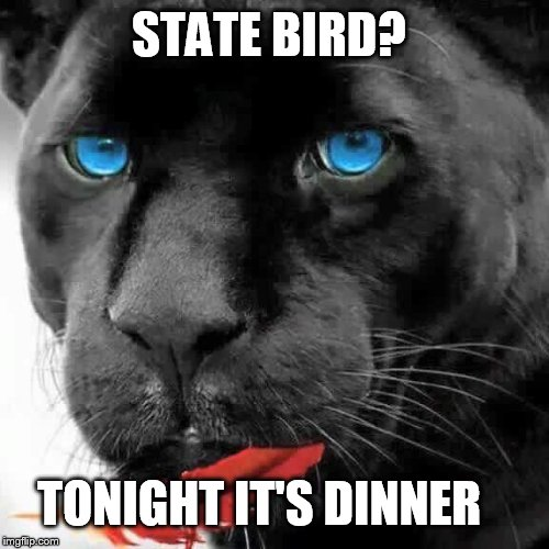 Panthers eat cardinals for dinner  | STATE BIRD? TONIGHT IT'S DINNER | image tagged in carolina panthers,nfc championship,football,cats | made w/ Imgflip meme maker