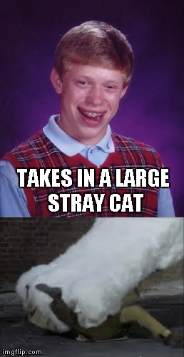 TAKES IN A LARGE STRAY CAT | made w/ Imgflip meme maker
