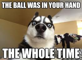 the ball | image tagged in funny,animals,dogs