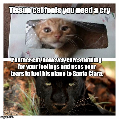 Dear Arizona: | Tissue cat feels you need a cry Panther cat, however, cares nothing for your feelings and uses your tears to fuel his plane to Santa Clara. | image tagged in carolina panthers,arizona,cardinals,football,super bowl,nfc championship | made w/ Imgflip meme maker