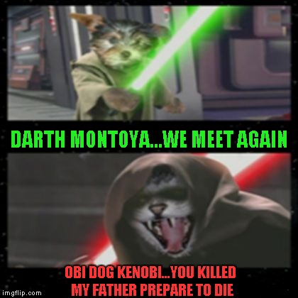Star Wars meets The Princess Bride...thank you again Disney. | DARTH MONTOYA...WE MEET AGAIN OBI DOG KENOBI...YOU KILLED MY FATHER PREPARE TO DIE | image tagged in dog vs cat lightsabers,dog vs cat,funny animals,star wars,funny,memes | made w/ Imgflip meme maker