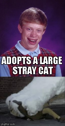 Bad Luck Brian | ADOPTS A LARGE STRAY CAT | image tagged in memes,bad luck brian | made w/ Imgflip meme maker