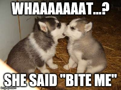 "Cute Puppies | WHAAAAAAAT...? SHE SAID ""BITE ME"" 