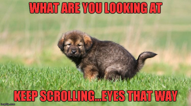 I am very uncomfortable having someone else in the bathroom while I'm sitting on the crapper. | WHAT ARE YOU LOOKING AT KEEP SCROLLING...EYES THAT WAY | image tagged in what are you looking at,funny dog,funny animals,fourth wall,memes,funny | made w/ Imgflip meme maker