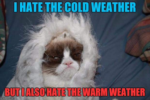Cold grumpy cat  | I HATE THE COLD WEATHER BUT I ALSO HATE THE WARM WEATHER | image tagged in cold grumpy cat | made w/ Imgflip meme maker