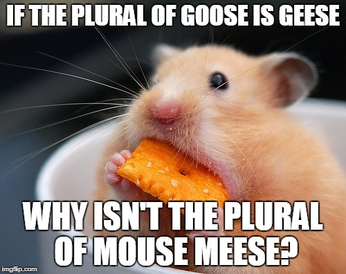 y1tuu cheese mouse meme generator imgflip
